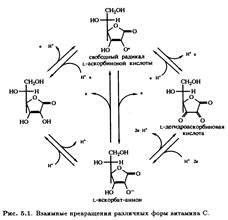 Реферат биохимия витамин с 9710